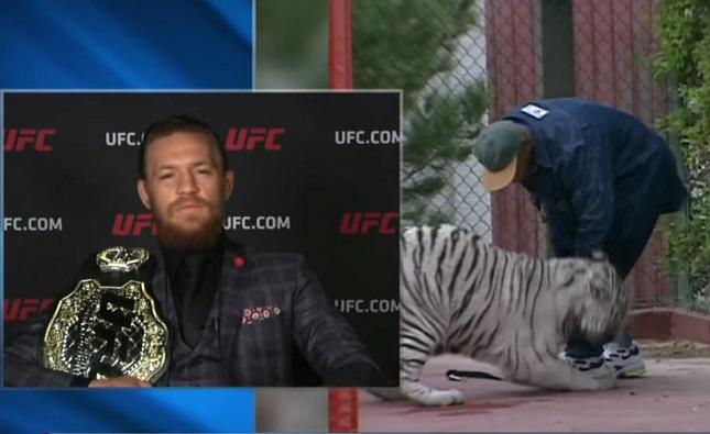 """Conor disse que não quer um tigre branco, mas um """"tradicional"""" laranja e preto. Foto: Reprodução"""